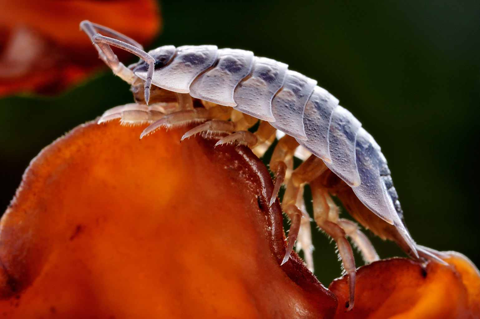 woodlouse 0003  PORTFOLIO GALLERY.jpg
